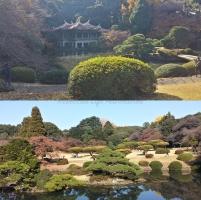 Japanese Traditional Garden